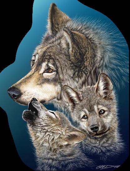 Волки цветное фото лучше собрать