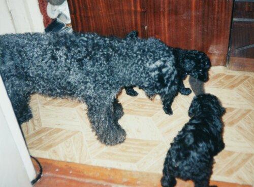 Купидон Реджина со щенками