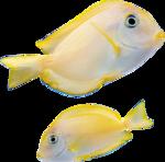 рыба (13).png