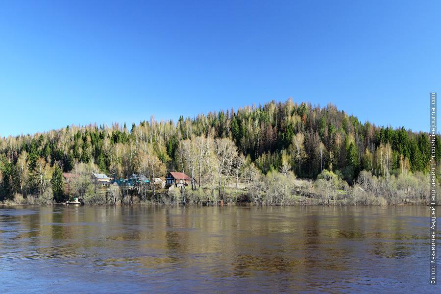 Смешанный глухой лес на берегу Вятки