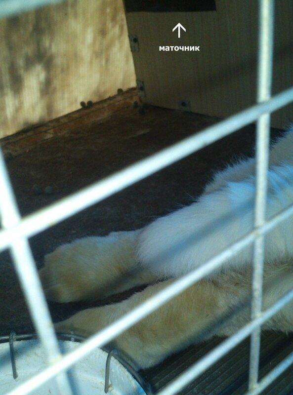 Пододерматит кроликов - Страница 2 0_ae95c_d76f836b_XL