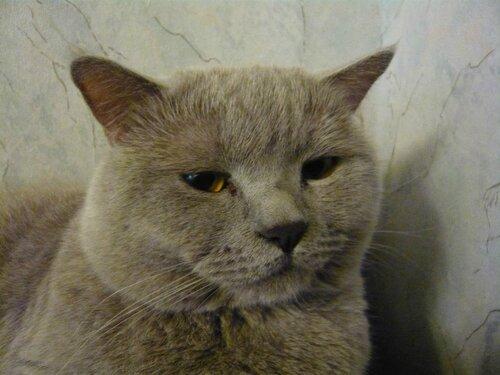 Кот Генрих