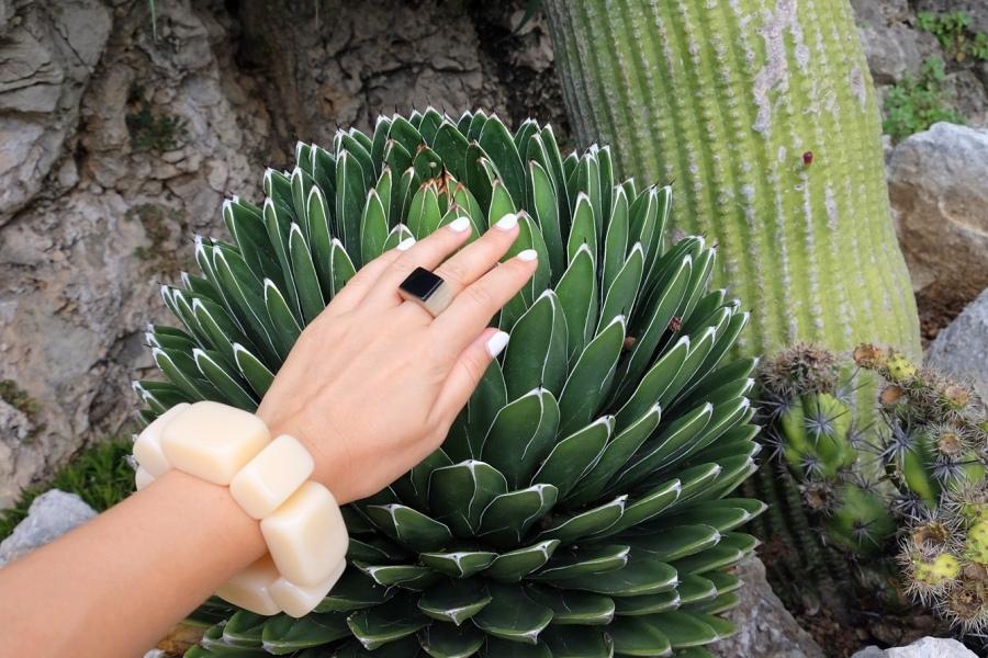 Просмотр кактус в попу фото 464-620