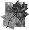 Осенние маски для фотошопа