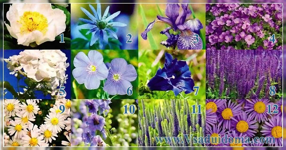 цветы для миксбордера - осень лето и весна (цветение)