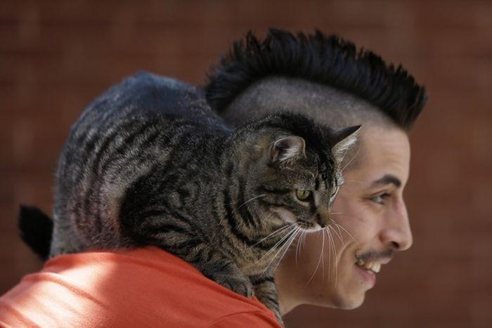 Кот на плече фото 8