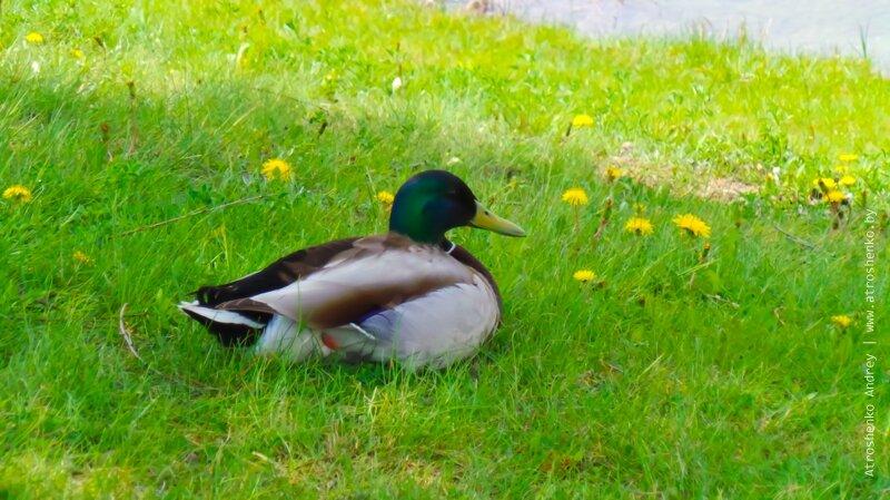 птицы в парке уручье
