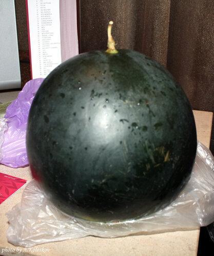 Португальский арбуз