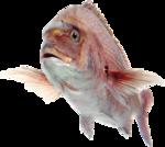 рыба (3).png
