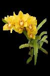 клипарт орхидеи