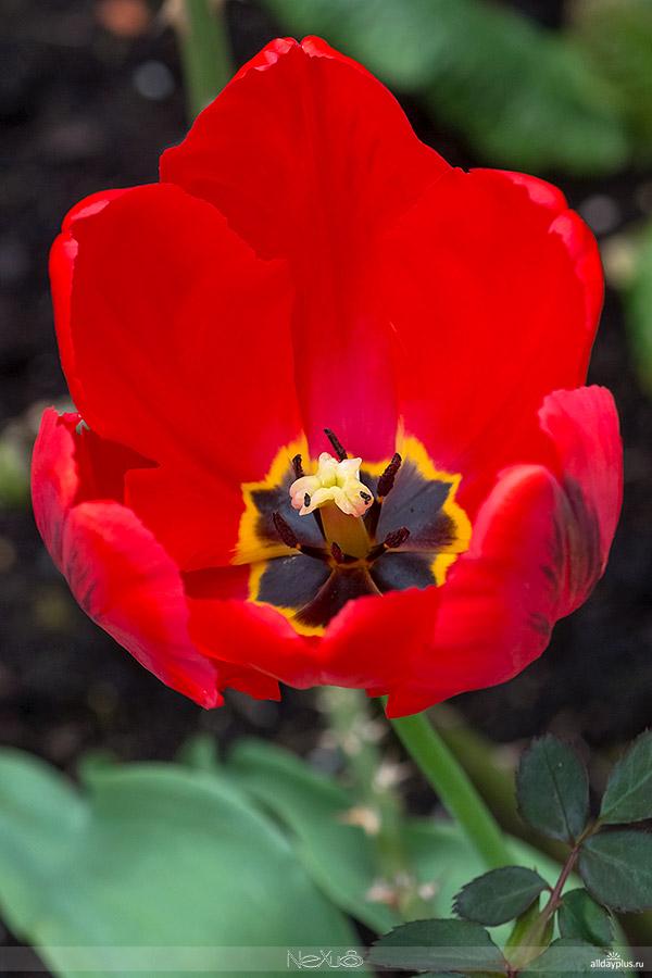 Я люблю все цветы, часть 37