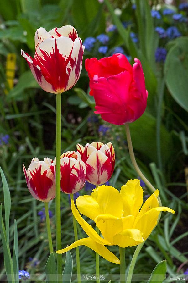 Я люблю все цветы, часть 41