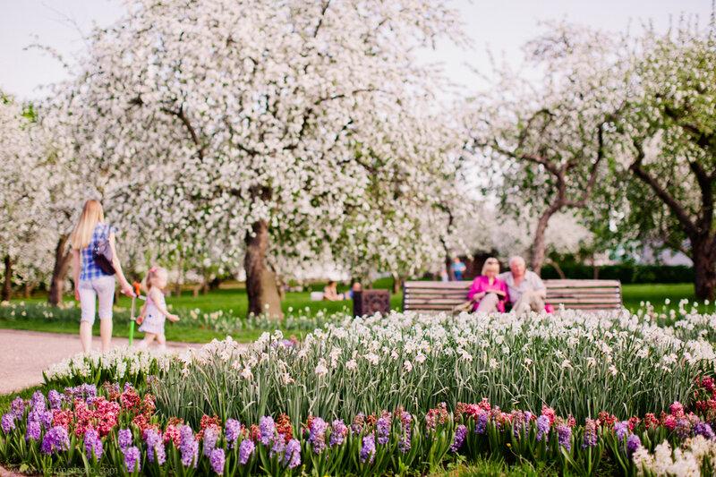 вариант, если фото с яблоней цветущей коломенское тот