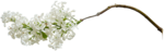 flower (45).png