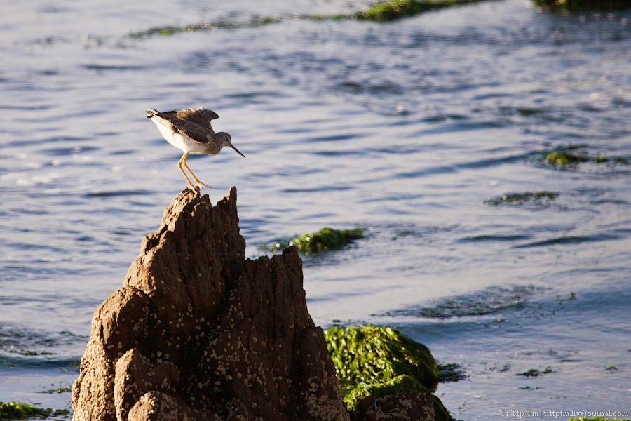 8. Дорогой курорт меж рекой и океаном. Пунта дель Эсте.
