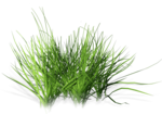 Bush and Grass  (111).png