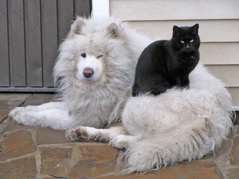 Чёрное на белом