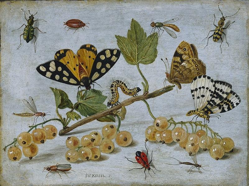 Собираю я гербарий!  Jan van Kessel. Старший