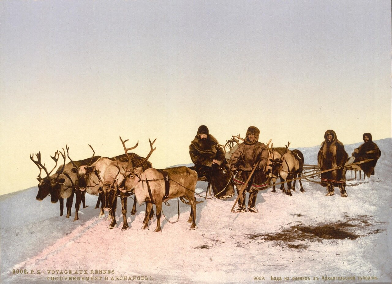 Езда на оленях в Архангельской губернии
