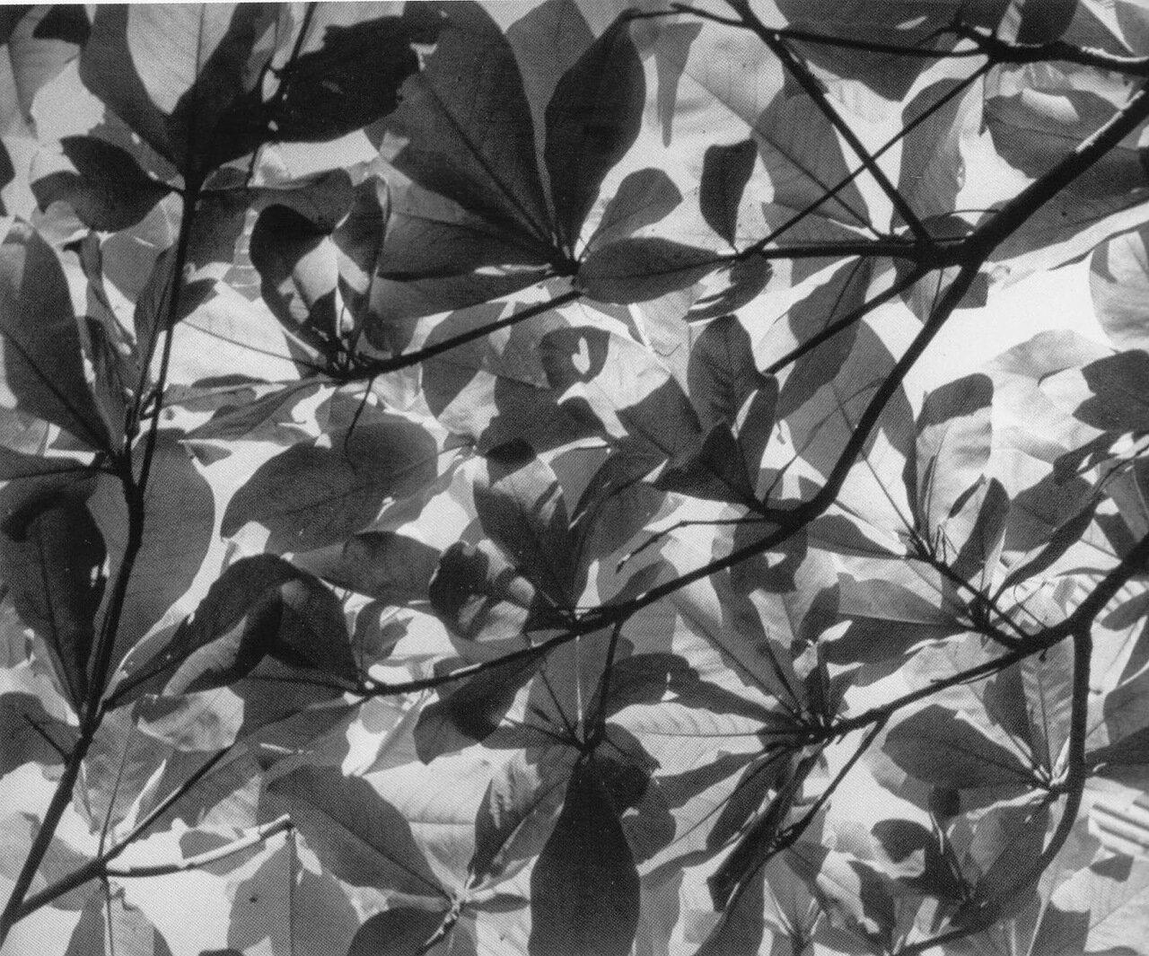 1950. Игра теней. Акапулько