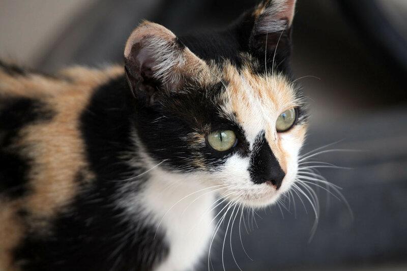 Агадир - кот