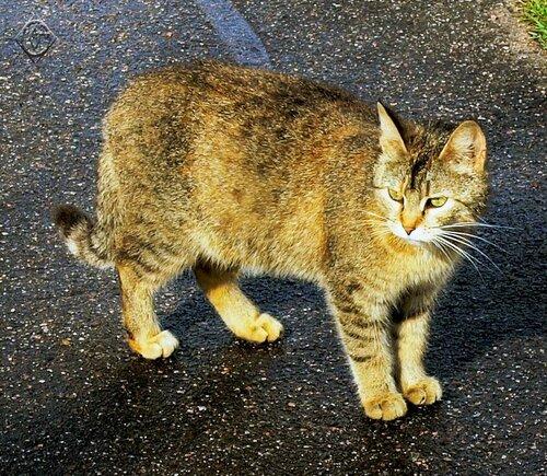 Симпатичная кошка