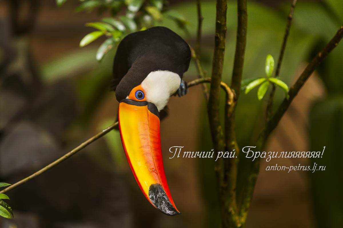 Парк птиц, Игуасу, Бразилия