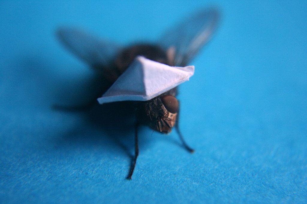 Путешествие мухи глазами Nicholas Hendrickx