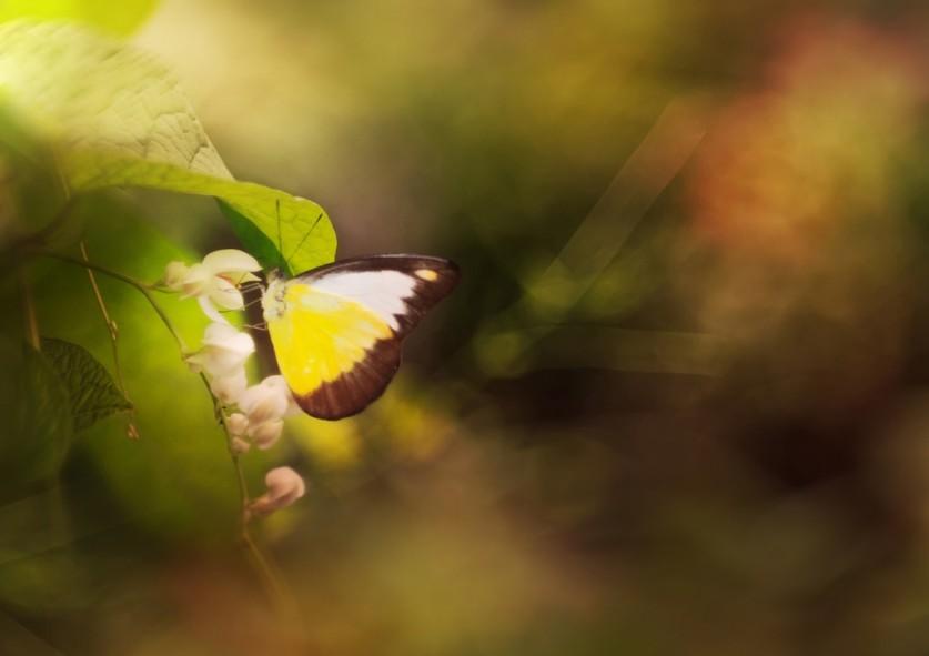 «Маленький маленький мир» от Пейлинг Ли (Lee Peiling) (16 фото)