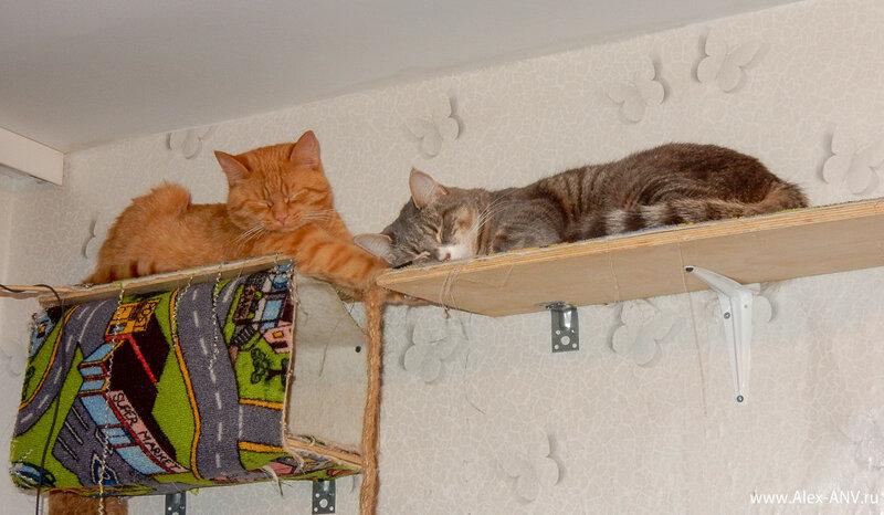 Вообще они много разных забавных поз для сна изобретают.