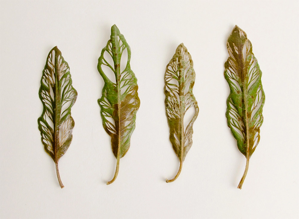 New Embroidered Leaves by Hillary Fayle