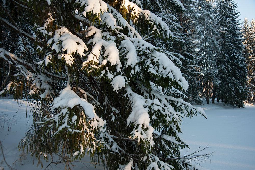 картинка дремучий лес зимний шарлотка яблоками это