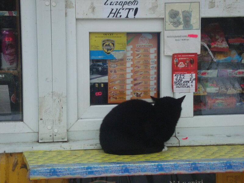 Харьков. Котэ