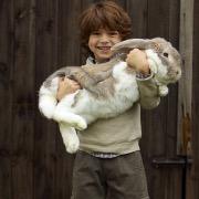 Большой кролик и мальчик