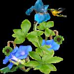 Коллекция высококачественного клипарта «Цветы и цветочные кластеры»