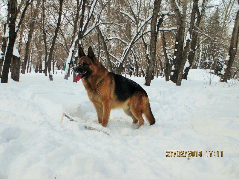 http://img-fotki.yandex.ru/get/6723/134559744.1b/0_bf821_3908e27a_XL.jpg