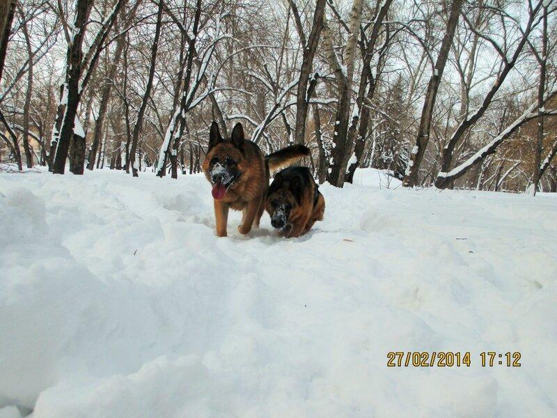 http://img-fotki.yandex.ru/get/6723/134559744.1b/0_bf822_85842069_XL.jpg