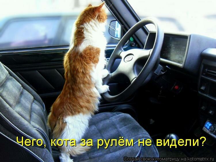 Прикольные картинки коты с надписями за рулем, днем бухгалтера
