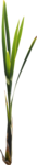 Bush and Grass  (143).png