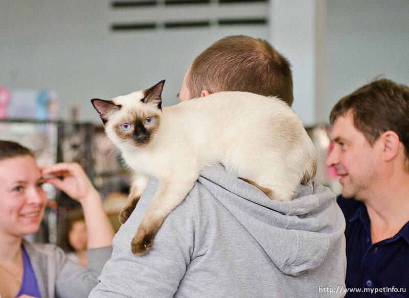 Выставка кошек Содружество-2014