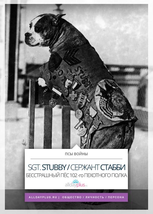 Бесстрашный сержант Стабби - пёс, прошедший Первую мировую