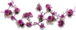 feli_ss_branch with flowerssh.png