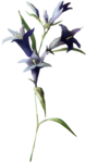 ldavi-paintersfaeries-flower12.png