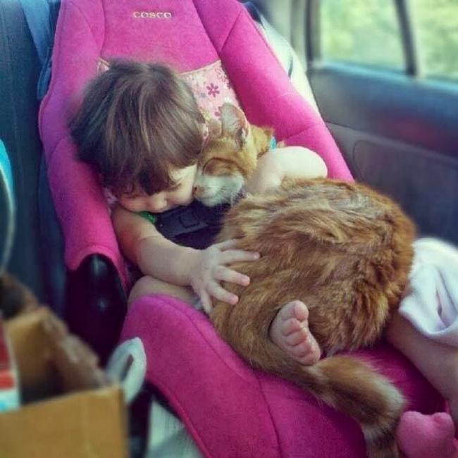 imgur.com Ядолжен показать этот пост другим котам