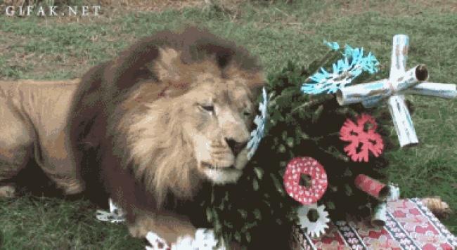 Какое Рождество? А-а, да, спасибо зановую расческу.