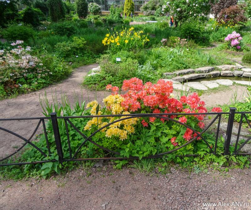 Ботаник из меня крайне посредственный, поэтому узнавайте цветы и растения на фотографиях самостоятельно. :)