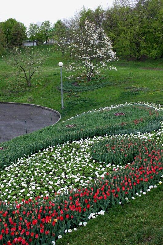 Выставка тюльпанов на Певческом поле
