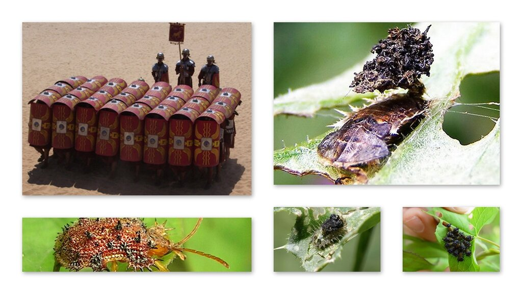 Военные стратегии насекомых