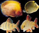 рыба (20).png