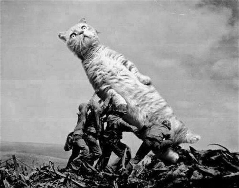 Морпехи 28-го полка 5й дивизии поднимают кота на вершине горы Сурибачи на о. Иводзима
